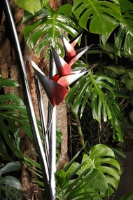 Heliconia group of 3 Artifact By Alex Davis