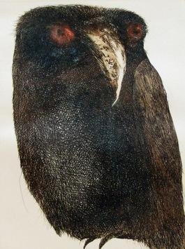 Owl by Shuvaprasanna B, , , Gray color
