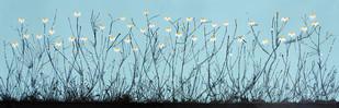 Poppies - Painting by Sumit Mehndiratta