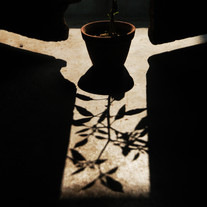 Shadow Play by Subhajit Dutta, Conceptual Photography, Digital Print on Paper, Black color