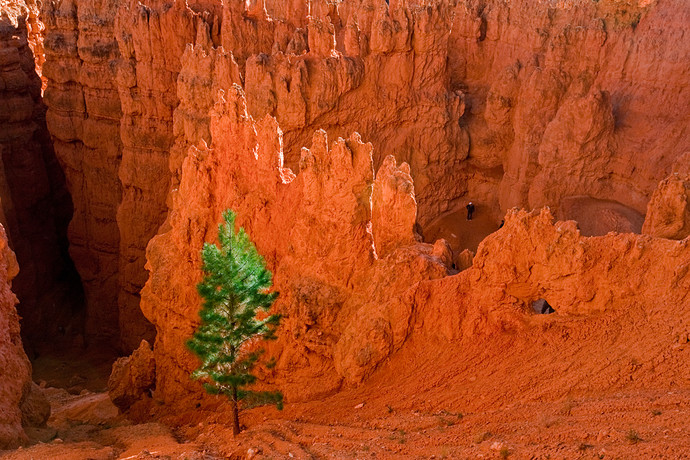 Sunset Point, Bryce Canyon, USA by Asis Kumar Sanyal, Photography, Digital Print on Paper, Brown color