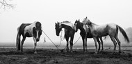 Morning Raga : Kolkata by Abhijit Chakraborty, Image Photography, Digital Print on Paper, Gray color