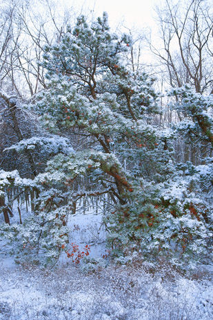 First Snow by Asis Kumar Sanyal, Photography, Digital Print on Paper, Green color