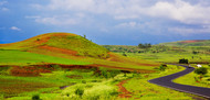 Madhya Pradesh in Rainy Season by Asis Kumar Sanyal, Photography, Digital Print on Paper, Green color