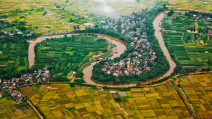 Red River Delta, North Vietnam by Asis Kumar Sanyal, Photography, Digital Print on Paper, Green color