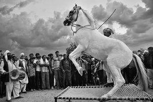 Horse dancing in a tribal fair. - Photograph by Asis Kumar Sanyal