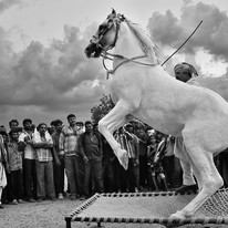 Horse Dancing in a Tribal Fair. by Asis Kumar Sanyal, Photography, Digital Print on Paper, Gray color