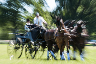 Horse Cart Race by Prabir Mitra, Image Photography, Digital Print on Paper, Green color