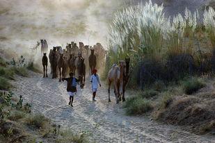 Home Bound - Photograph by Sandipan Majumdar