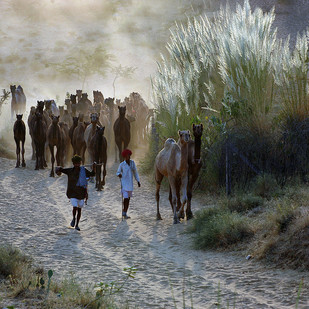 Home Bound by Sandipan Majumdar, Image Photography, Digital Print on Paper, Gray color