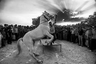 The Rising Pegasus by Rikh Mukherjee, Photography, Digital Print on Canvas, Gray color