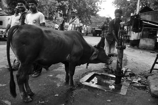 The real one by Debabrata Sarkar, Image Photography, Digital Print on Paper, Gray color