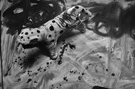 Ferocious by Debabrata Sarkar, Image Photograph, Digital Print on Paper, Gray color