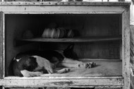 Rest by Debabrata Sarkar, Image Photograph, Digital Print on Paper, Gray color
