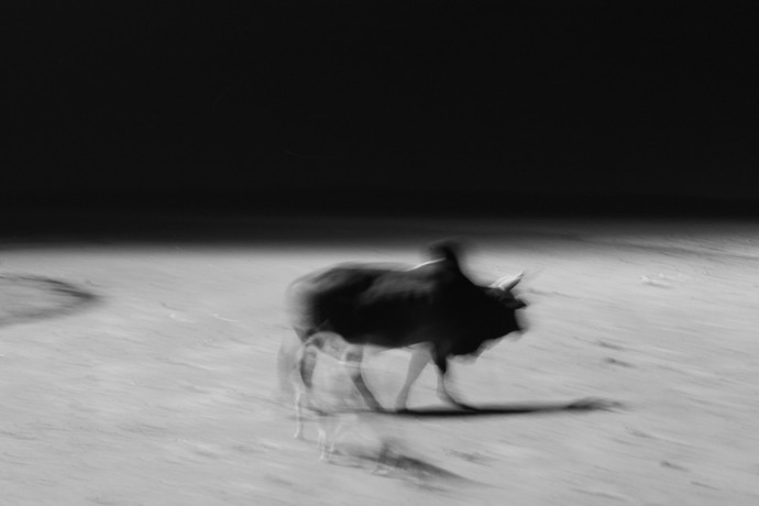Movement by Debabrata Sarkar, Image Photograph, Digital Print on Paper, Gray color