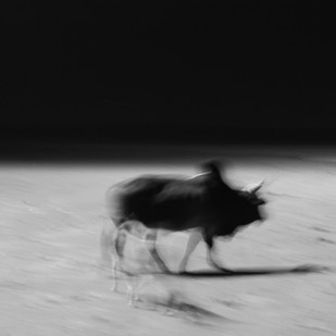 Movement by Debabrata Sarkar, Image Photograph, Digital Print on Paper, Gray color