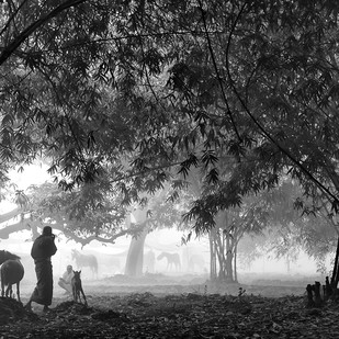 Early dawn by Arnab Adak, Image Photograph, Digital Print on Paper, Gray color