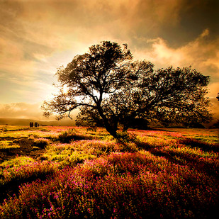 Blooming Horizon by CR Shelare, Image Photograph, Digital Print on Canvas, Brown color