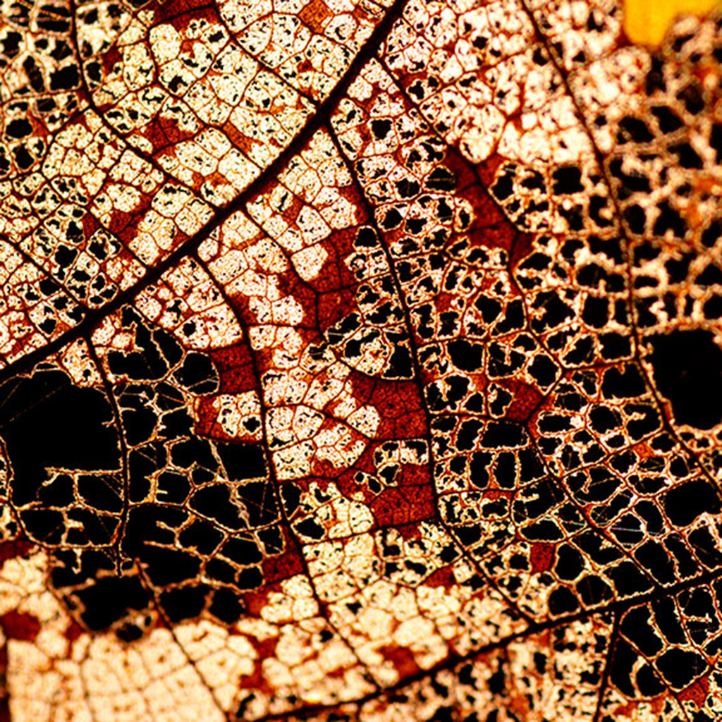 Configuration 04 by CR Shelare, Image Photograph, Digital Print on Paper, Brown color