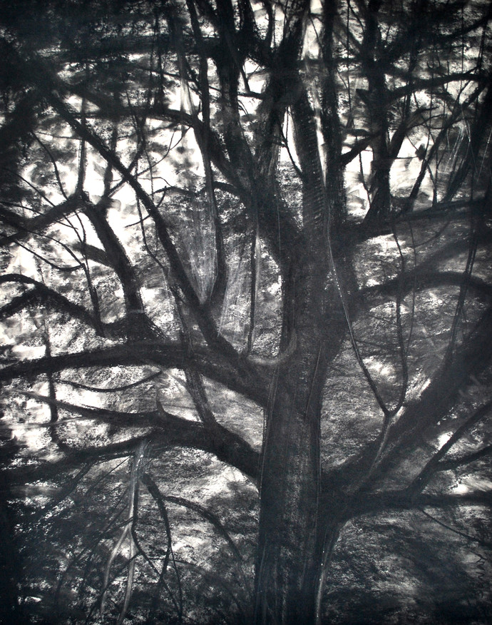 Branches III by Sumantra Mukherjee, Illustration Drawing, Charcoal on Paper, Gray color