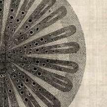 Cross Cut III Right Digital Print by Butler, John,Decorative