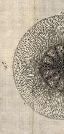 Cross Cut IV Left Digital Print by Butler, John,Abstract
