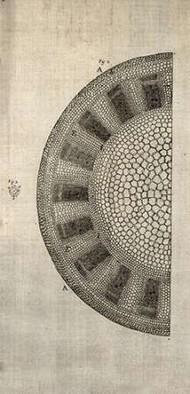 Cross Cut I Left Digital Print by Butler, John,Abstract
