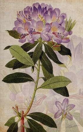 Rhododendron II Digital Print by Butler, John,Impressionism