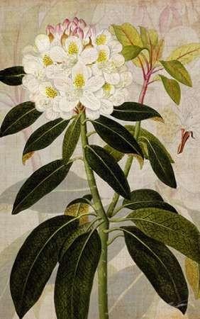 Rhododendron I Digital Print by Butler, John,Impressionism
