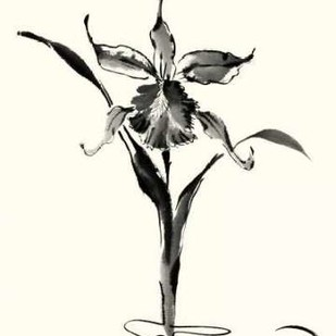 Studies in Ink - Cattleya Digital Print by Rae, Nan,Illustration