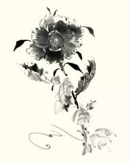 Studies in Ink - Rose I Digital Print by Rae, Nan,Illustration