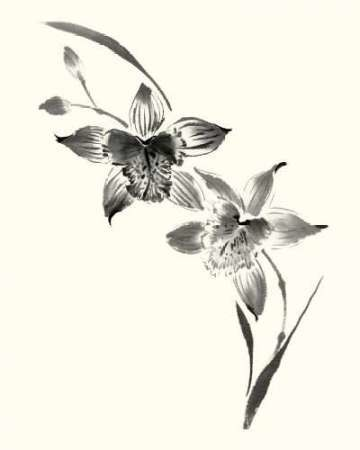 Studies in Ink - Cymbidium Digital Print by Rae, Nan,Illustration