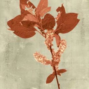 Impressions in Terra Cotta Digital Print by Vision Studio,Decorative