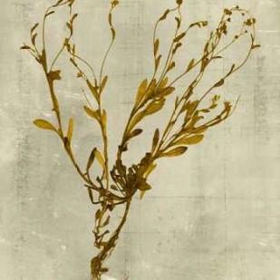 Impressions In Mustard Digital Print by Vision Studio,Decorative