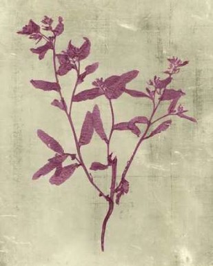 Impressions In Plum Digital Print by Vision Studio,Decorative