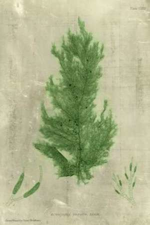 Emerald Seaweed I Digital Print by Unknown,Decorative