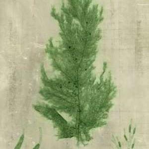 Emerald Seaweed I Digital Print by Unknown,Decorative