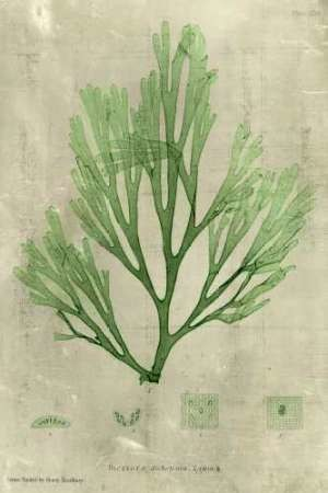 Emerald Seaweed II Digital Print by Unknown,Decorative