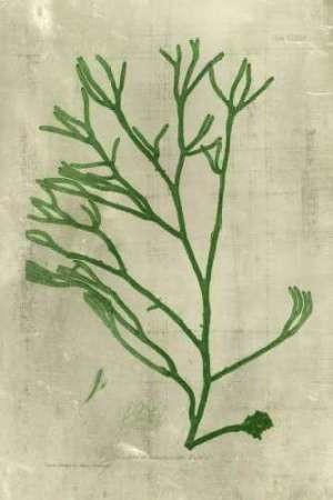 Emerald Seaweed III Digital Print by Unknown,Decorative
