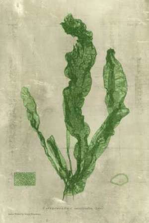 Emerald Seaweed IV Digital Print by Unknown,Decorative