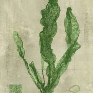 Emerald Seaweed IV Digital Print by Unknown,Decorative
