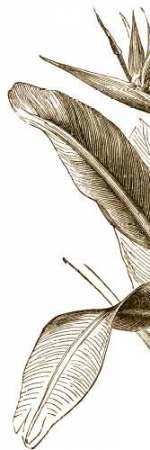 Bird Of Paradise Triptych I Digital Print by Vision Studio,Illustration
