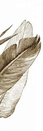 Bird of Paradise Triptych III Digital Print by Vision Studio,Illustration
