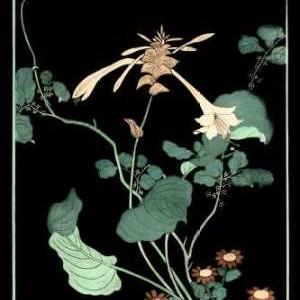 Midnight Floral I Digital Print by Vision Studio,Decorative