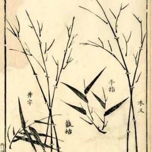 Bamboo Woodblock II Digital Print by Vision Studio,Decorative