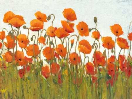 Rows of Poppies II Digital Print by O'Toole, Tim,Decorative