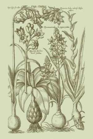 Garden of Flora I Digital Print by Vision Studio,Illustration
