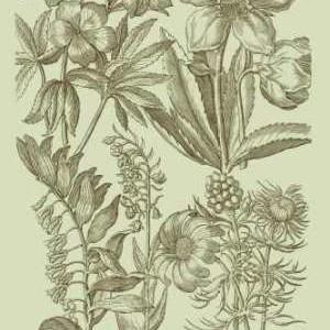 Garden of Flora III Digital Print by Vision Studio,Illustration