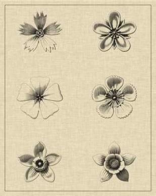 Floral Rosette II Digital Print by Vision Studio,Illustration