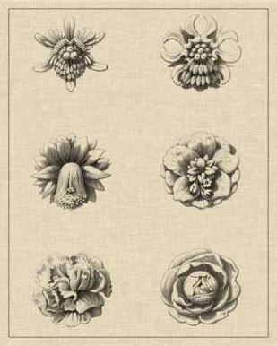 Floral Rosette III Digital Print by Vision Studio,Illustration